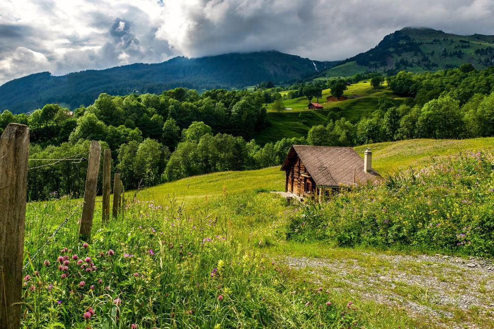 Grindlewald by SwissMr