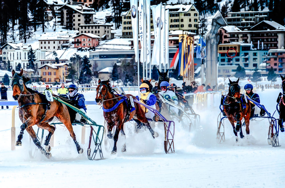 white turf horse racing by SwissMr