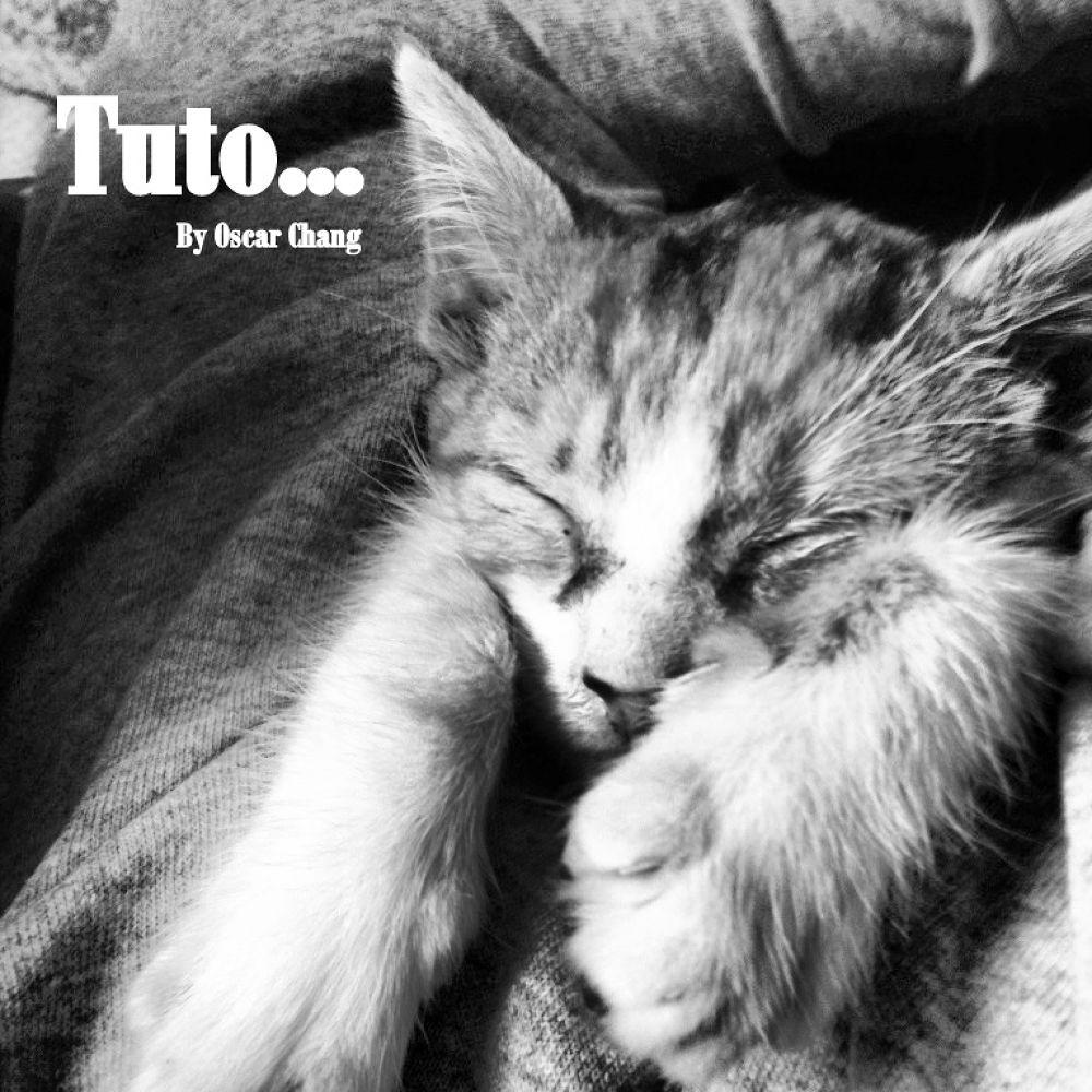 Photo in Animal #chile #chiloé #queilen #gatos #animales