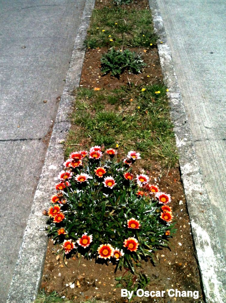 Photo in Random #chile #chiloé #queilen