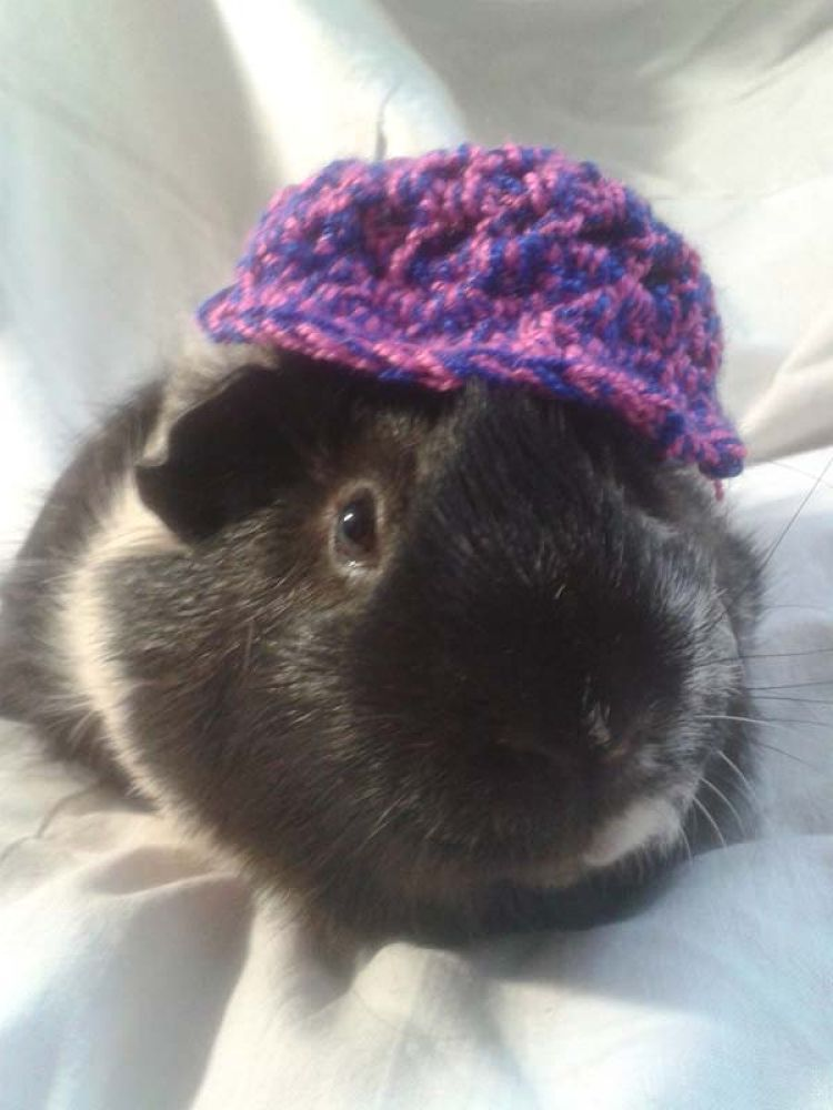 my guinea pig (mr.happy) by Maryam Ahmadi