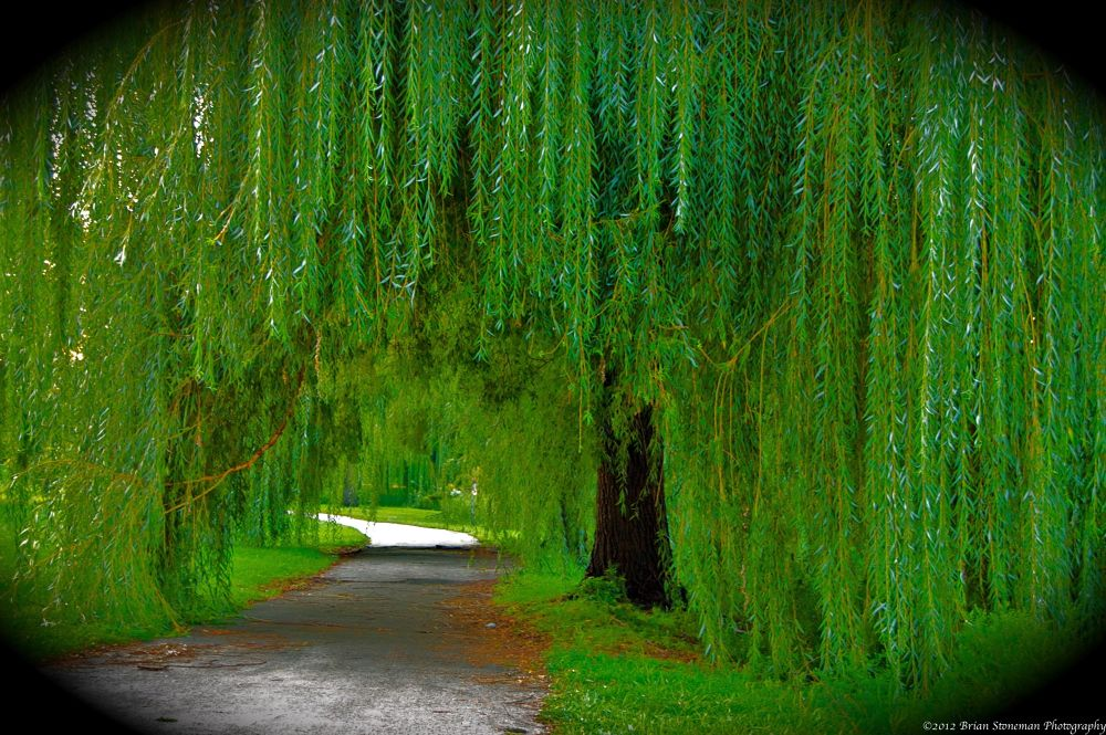 The willow path by stonerz68