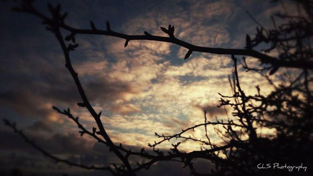 twig frame... by clareyboe
