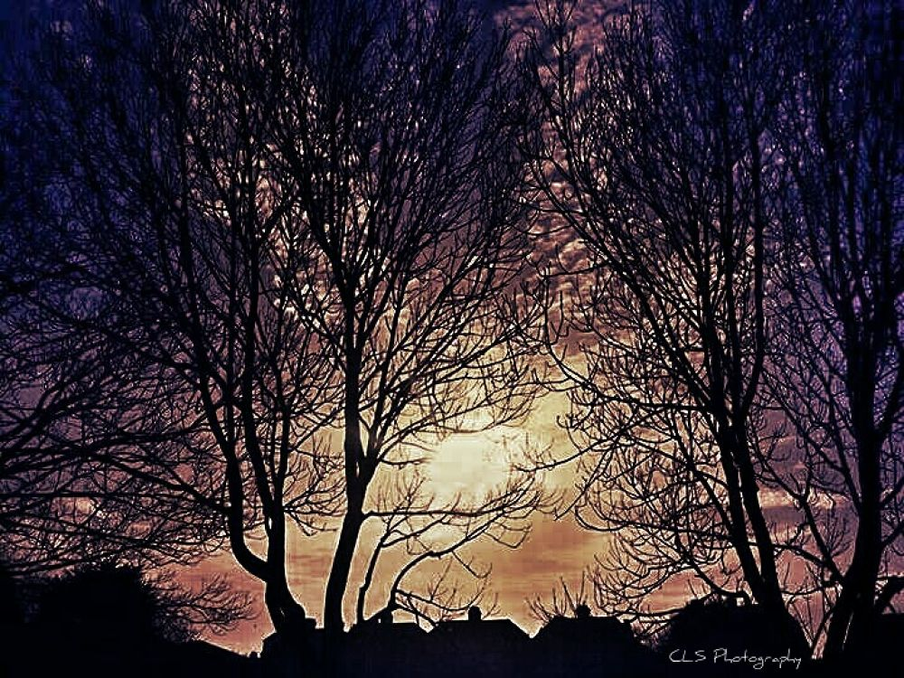 treetops... by clareyboe