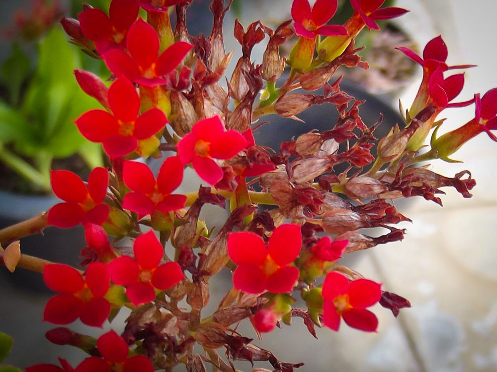 Scarlet flowers by Scarlet Butterfly