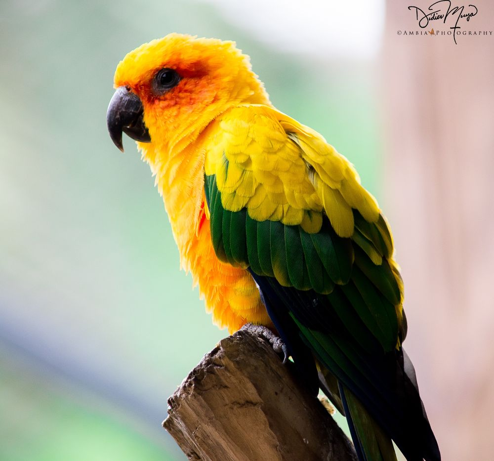 Photo in Animal #parrots