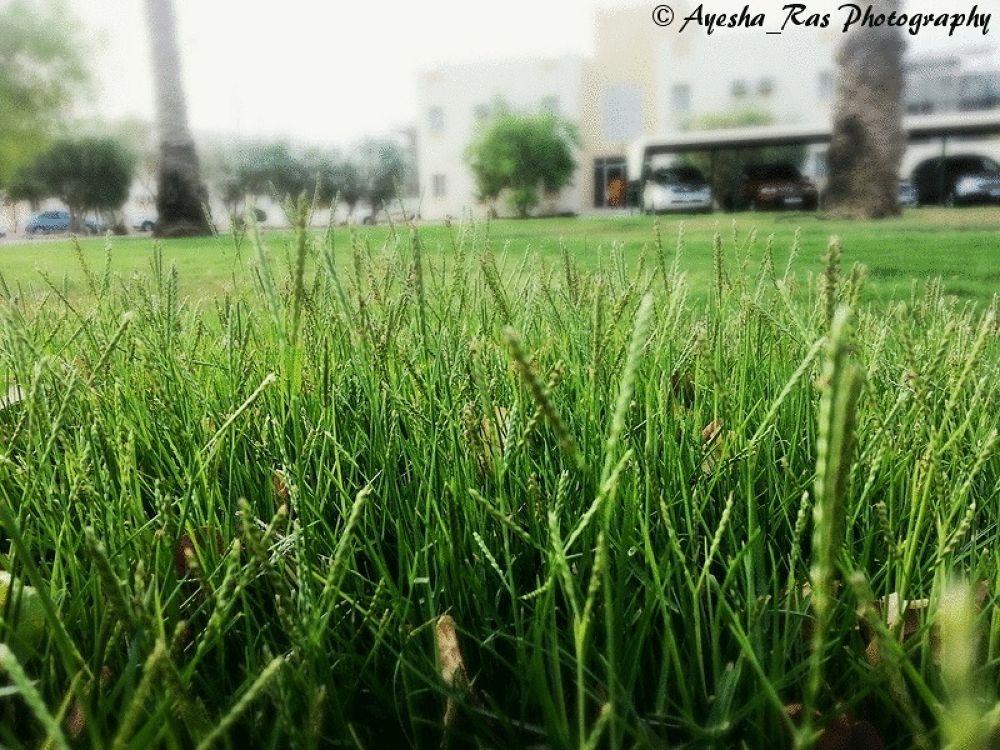 myphoto13 by Ayesha Ras