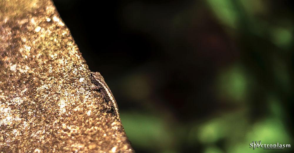 Photo in Macro #salamander #canon #eos m #canon eos m #helios #lizard #camouflage #bokeh #reptiles #nature #stone