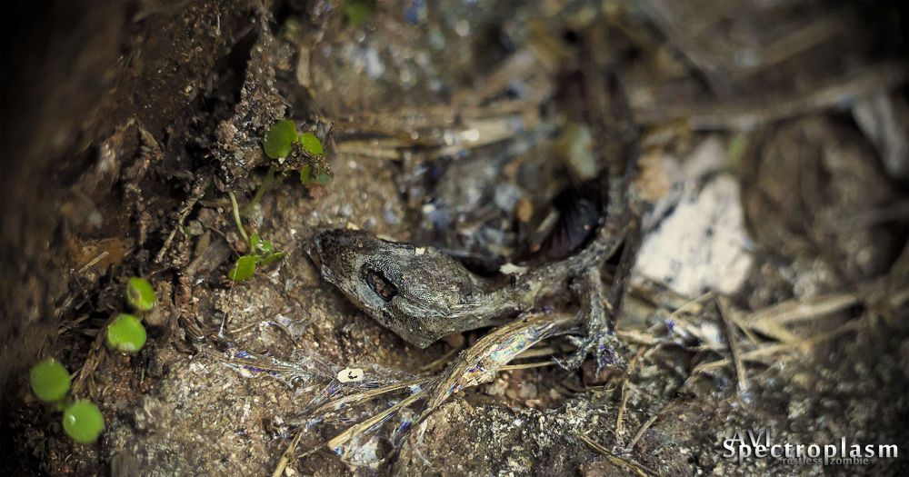 Photo in Macro #salamander #slug #bokeh #close up #nature #clovers #decay #slime #canon #canon eos m #eos m