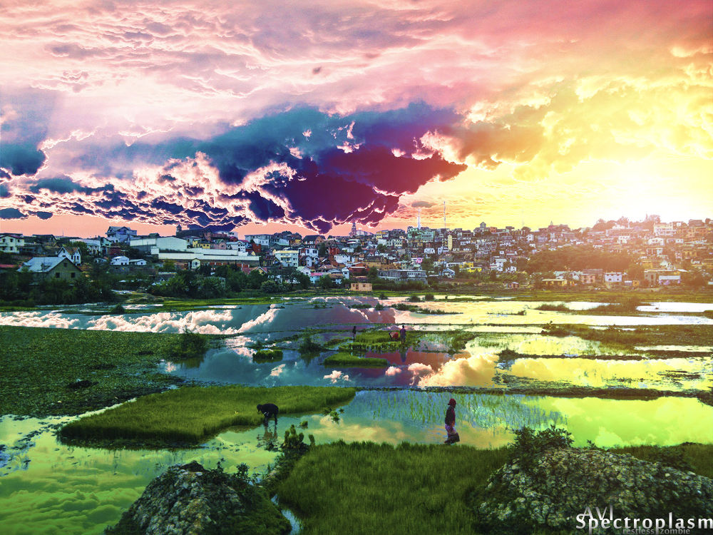 Photo in Landscape #rice paddies #ricefield #farmers #dusk #pearl #manual lens
