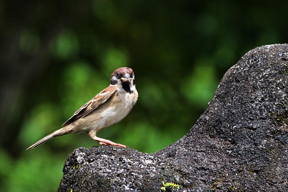 Photo in Animal #birds #animal #tomohon #indonesia