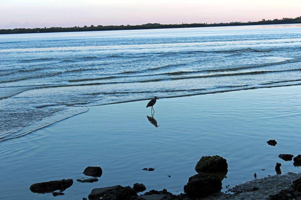 Gulf Coast by Standard Photography