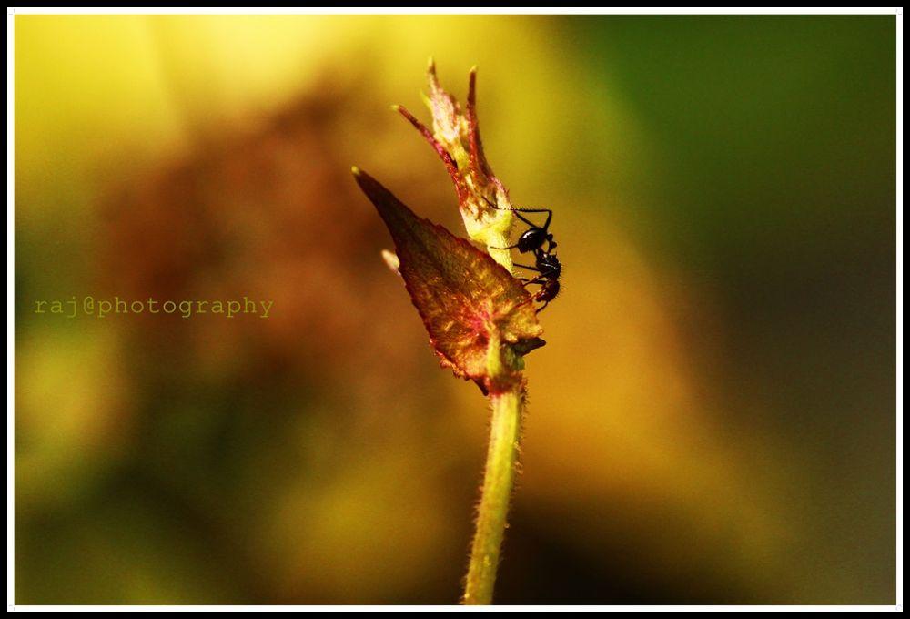 IMG_5132 by Raj Photograpy