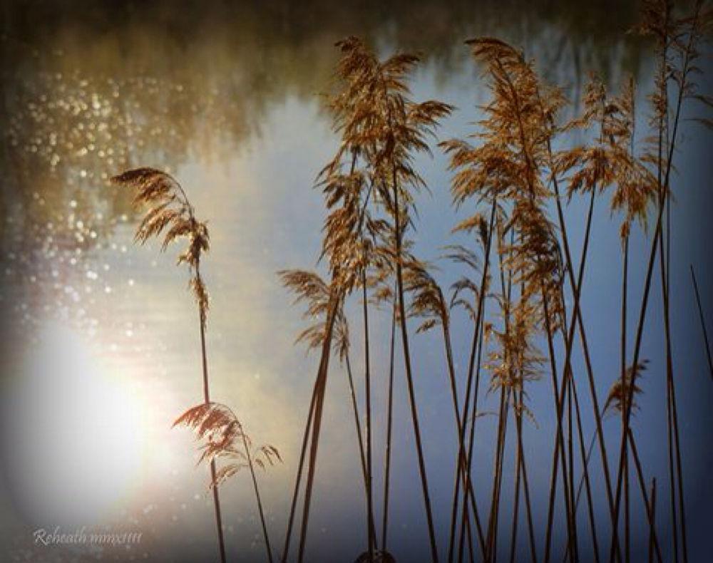 IMG_0098 by Randy Heath