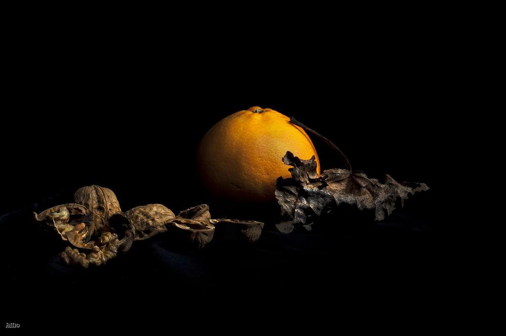 Still Life by Alfredo Maccarrone