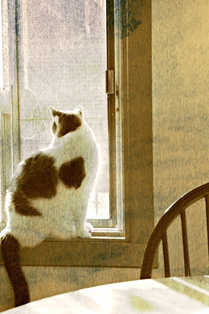 cat sniffing the fresh morning air  by zazem3