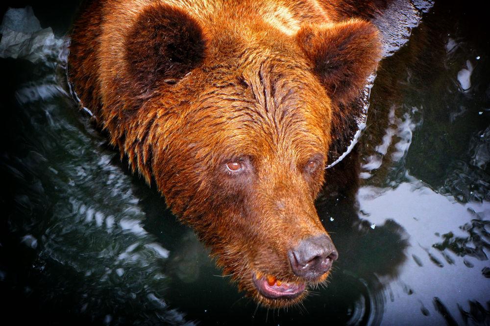Bear by Jorge Coromina