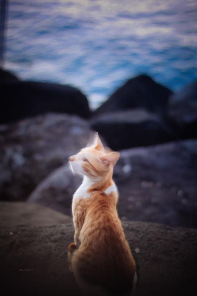 cat  by Nea Torres