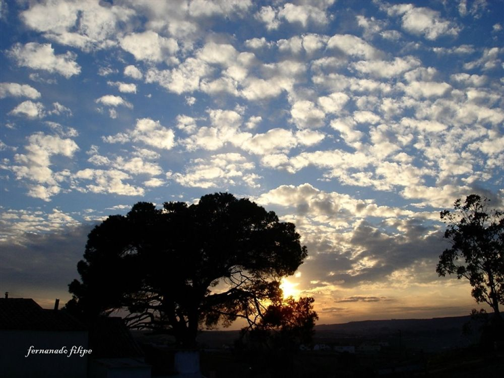 cordeiros in the sky by ramsys