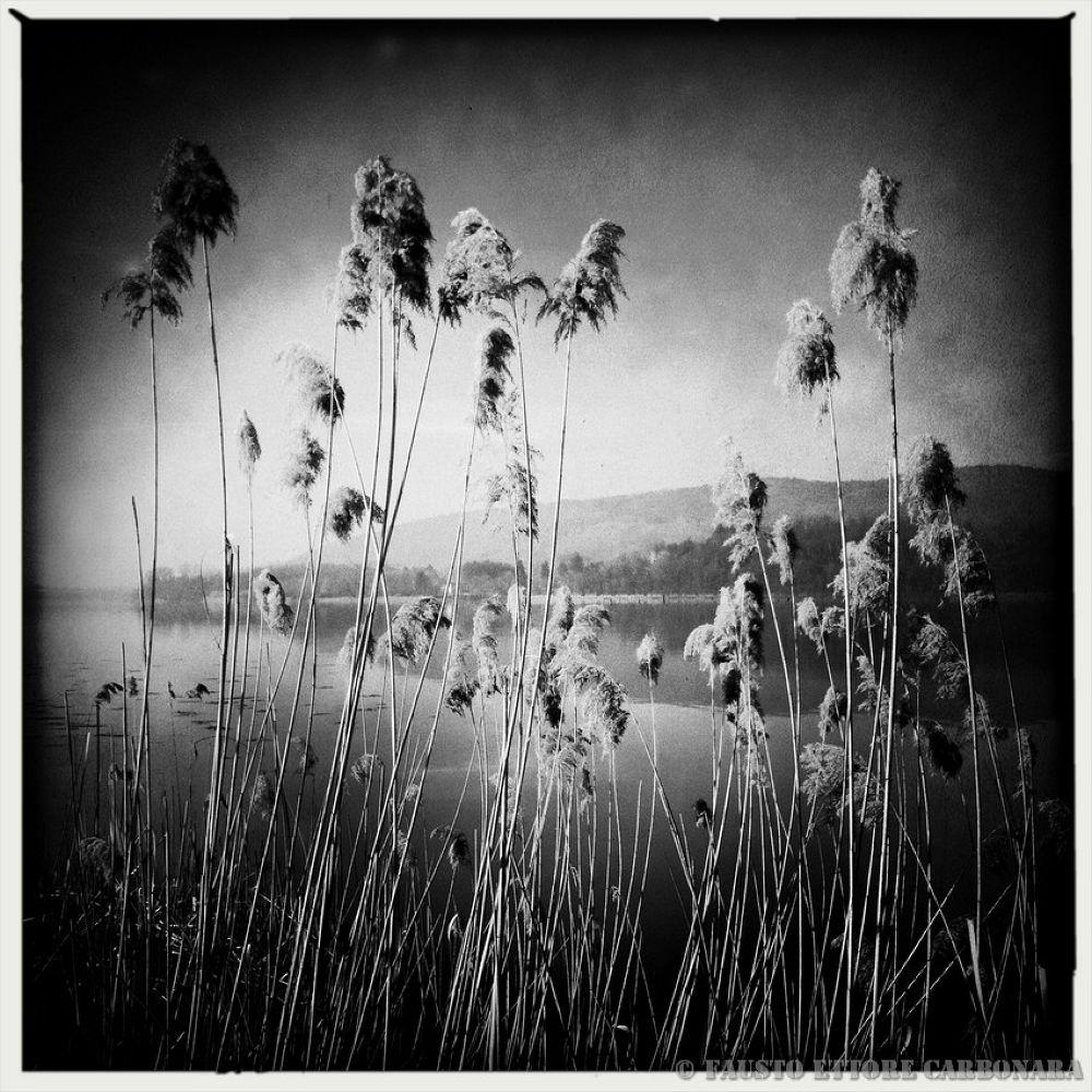 Stillness by Fausto Ettore Carbonara