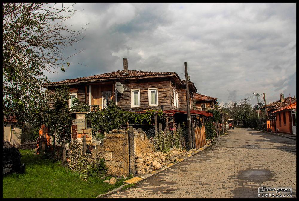 IMG_3051 by Taner Yavuz