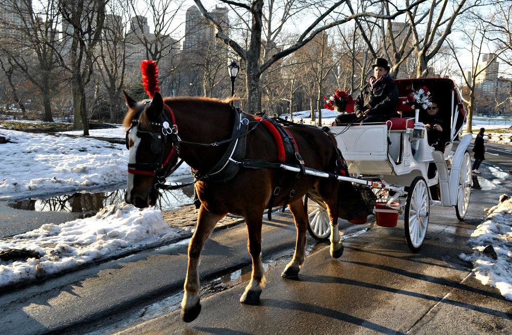 Photo in Cityscape #horse new york central park sn