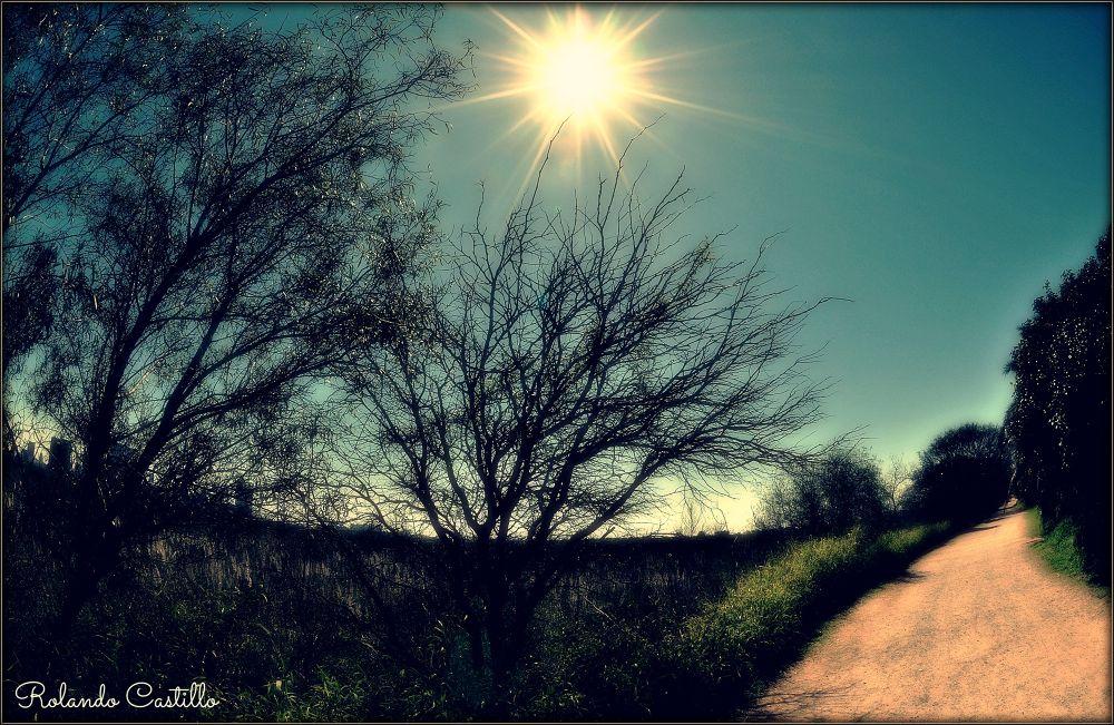 Photo in Random #sun #sol #árboles #trees #sky #cielo #reserva #ecológica #buenos aires #argentina