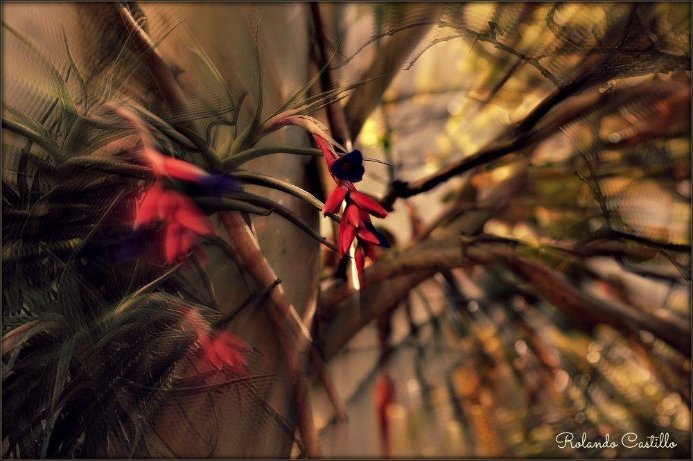 Photo in Random #flor #flower #colores #colors #plantas #plants #garden #jardín