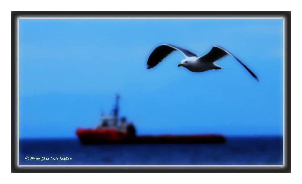 Mar, barco y gaviotas (Sea, ships and seagulls) by José Luis Ibáñez