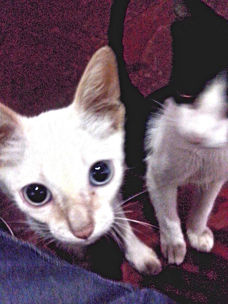 Two Ball Cat (Brazilian Joke) by Wilton Vital