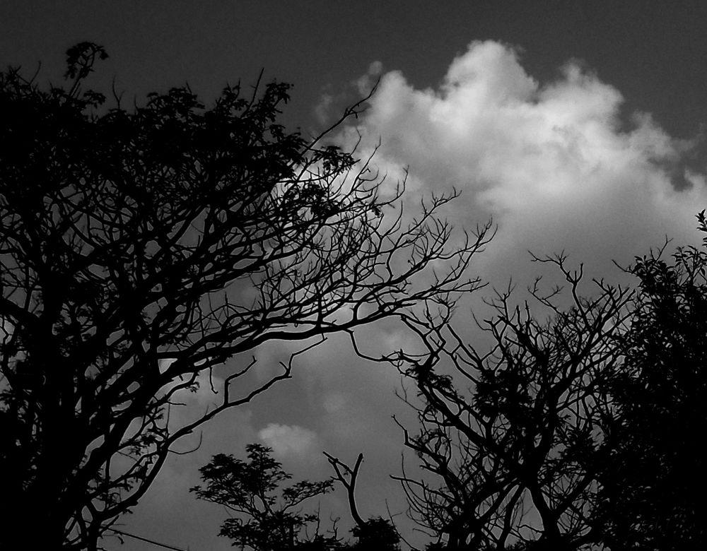 Halloween  by Brotipriya Das