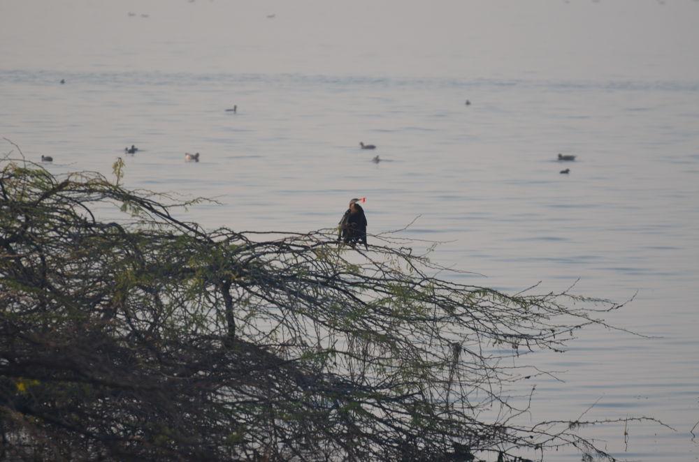 A good catch by Shrenik Dodhia