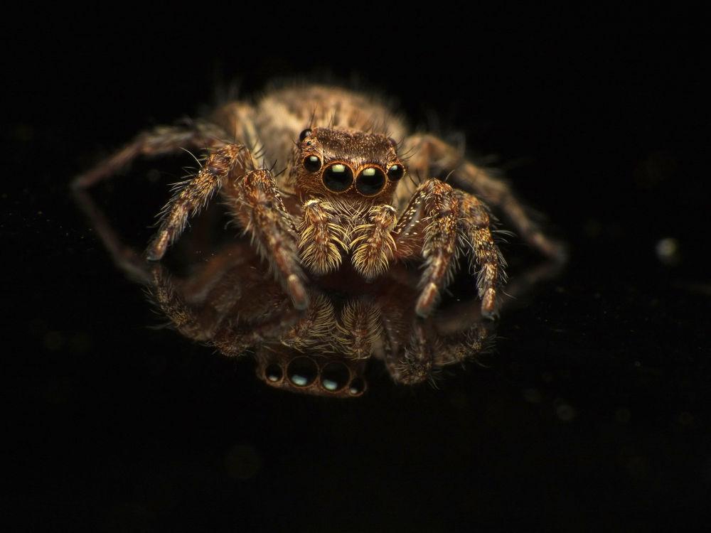 Hello darkside of me by Dominikus VD