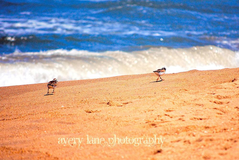 Beach Birds by Lanie Avery