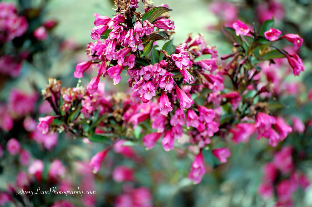 Hanging Blossom  by Lanie Avery