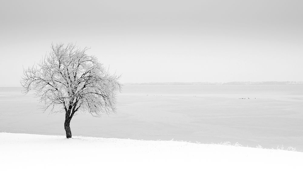 Photo in Black and White #lanscape #white #b&w #tree #winter