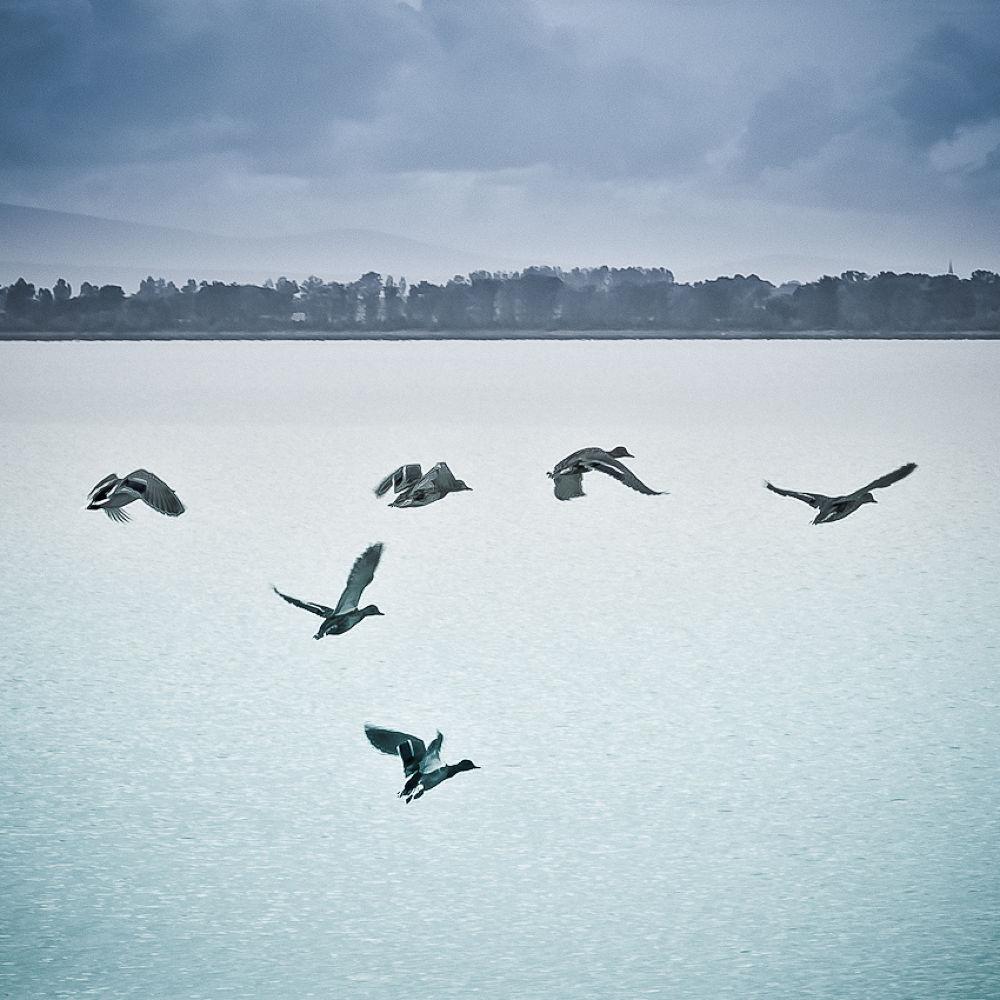 flying dreams by Juraj ČIČATKO