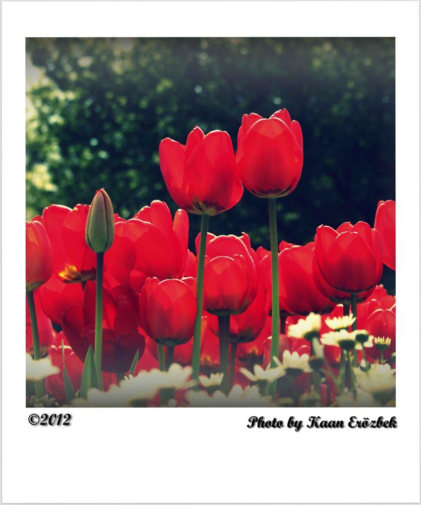 65456465465464 by Kaan Erözbek