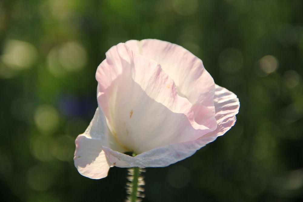 Photo in Nature #floral #garden #bokeh
