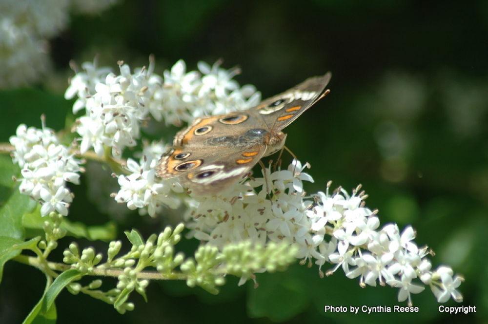 Butterfly by dewmtnbug