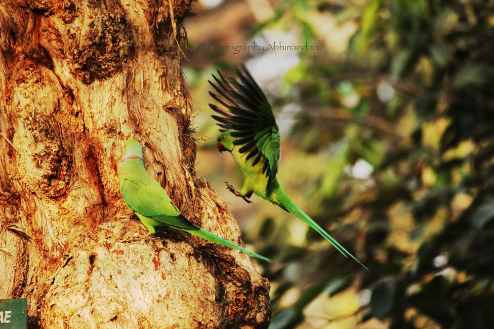 Landing by Abhinandan Patgiri