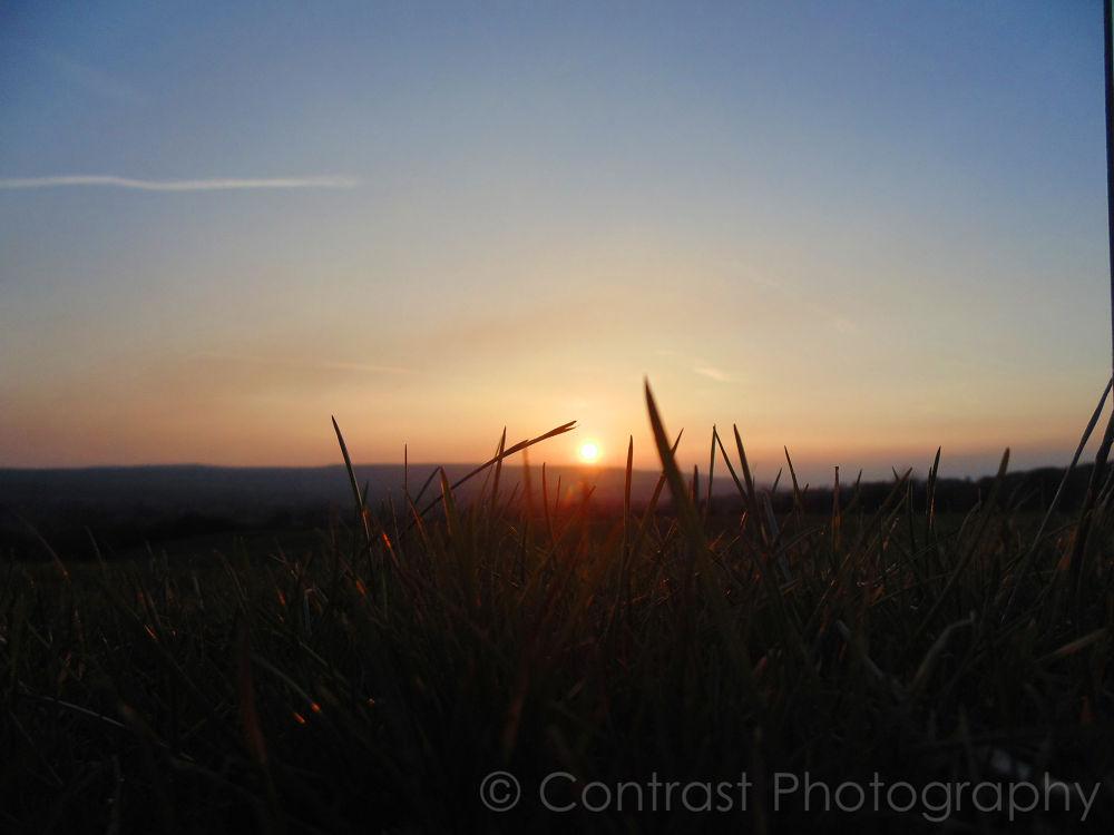 Blades of Grass by Sean Winder