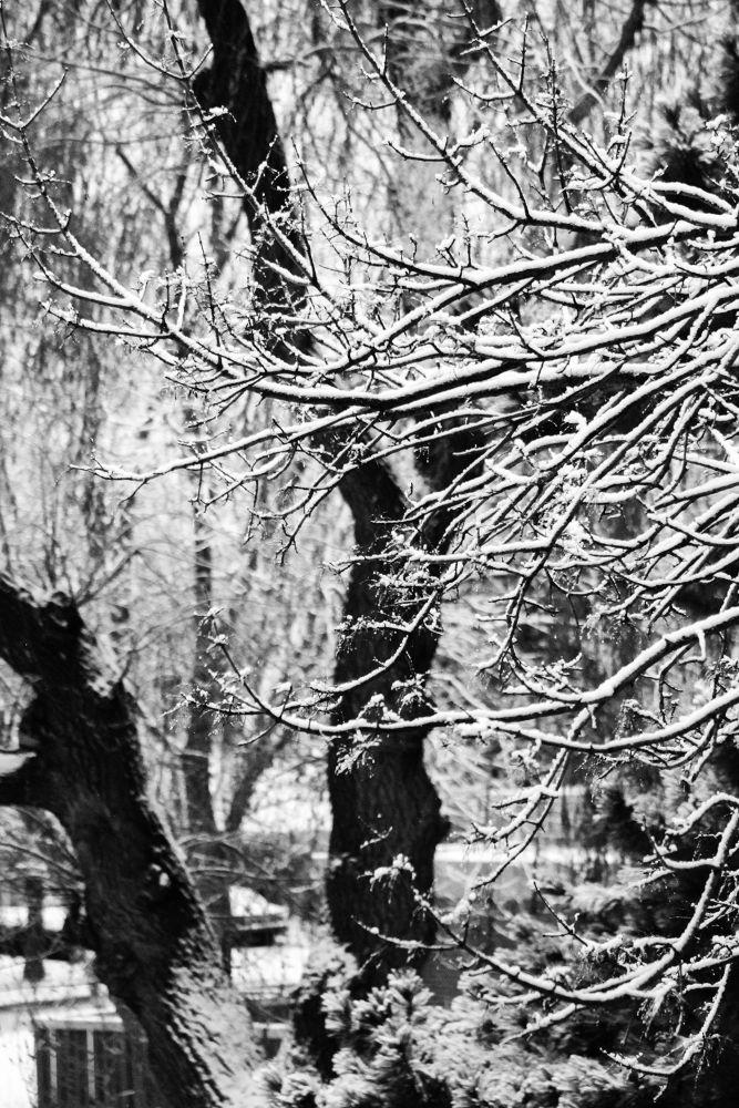Winter days  by Bhanuka Hettiarachchi