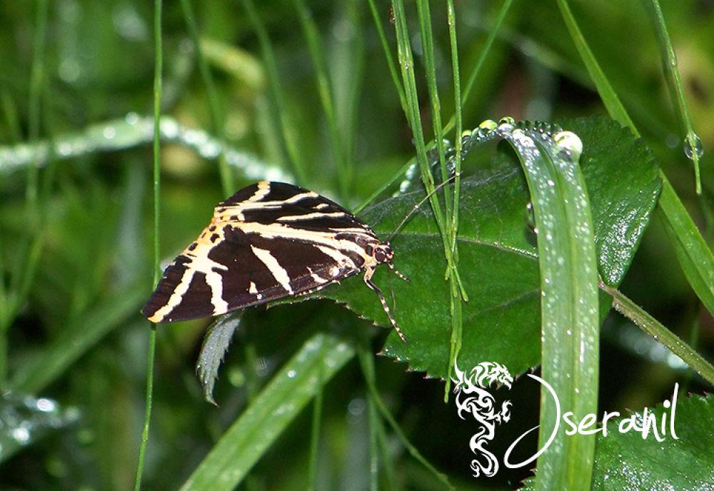 butterfly by Jseranil
