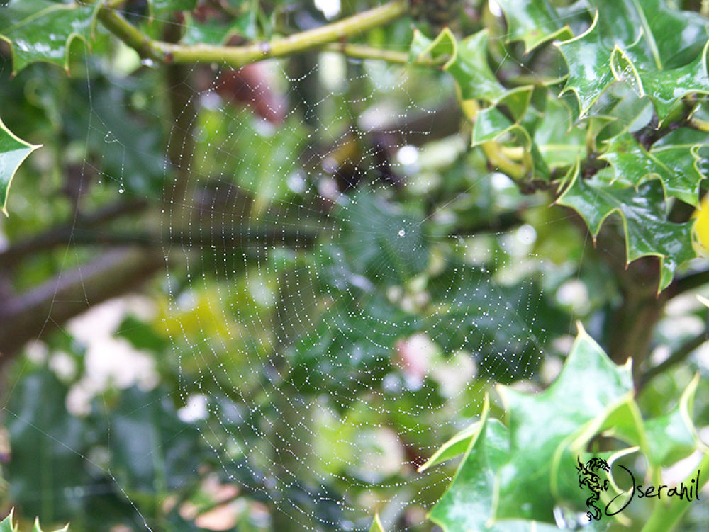 Spider web on a summer storm day by Jseranil