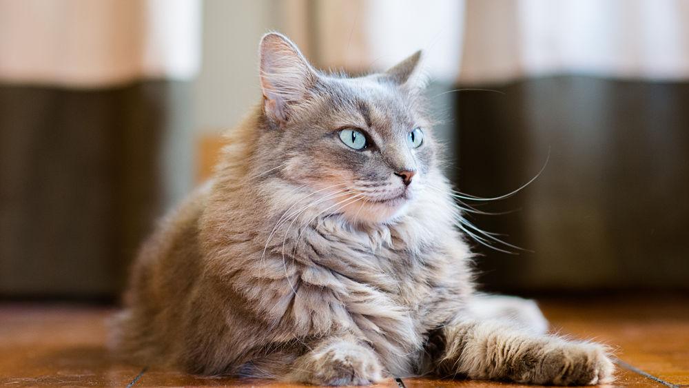 Photo in Animal #cat #fluffy #feline