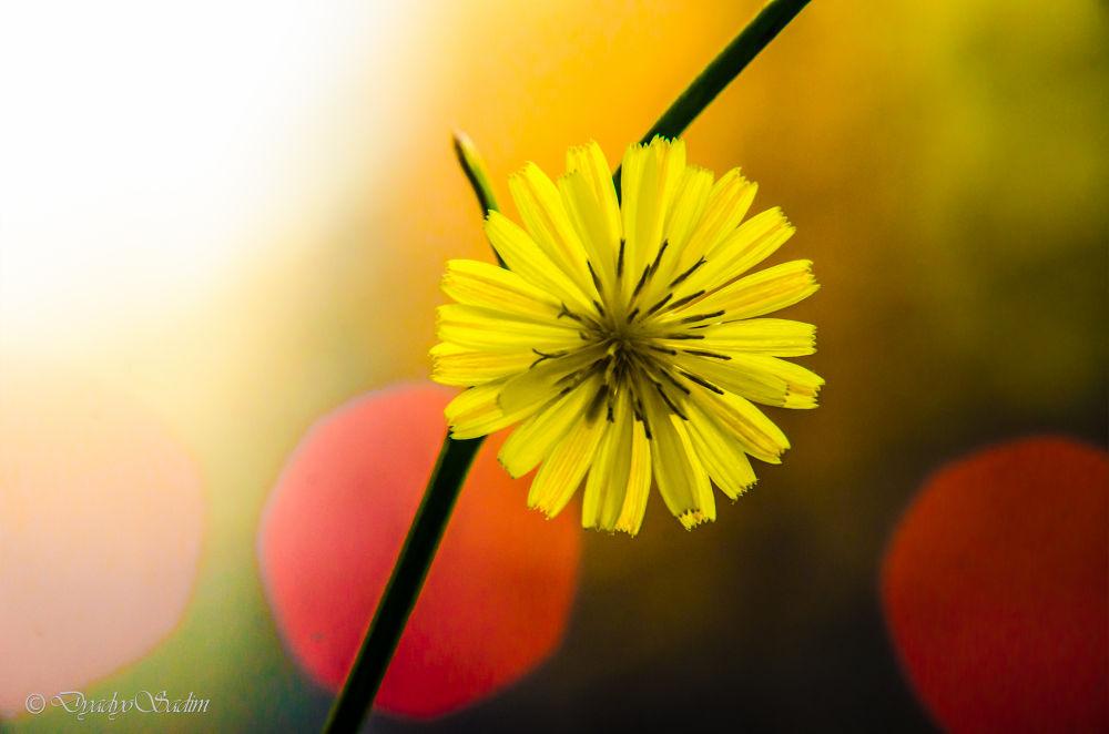 Yellow on Bokeh by dyosadim