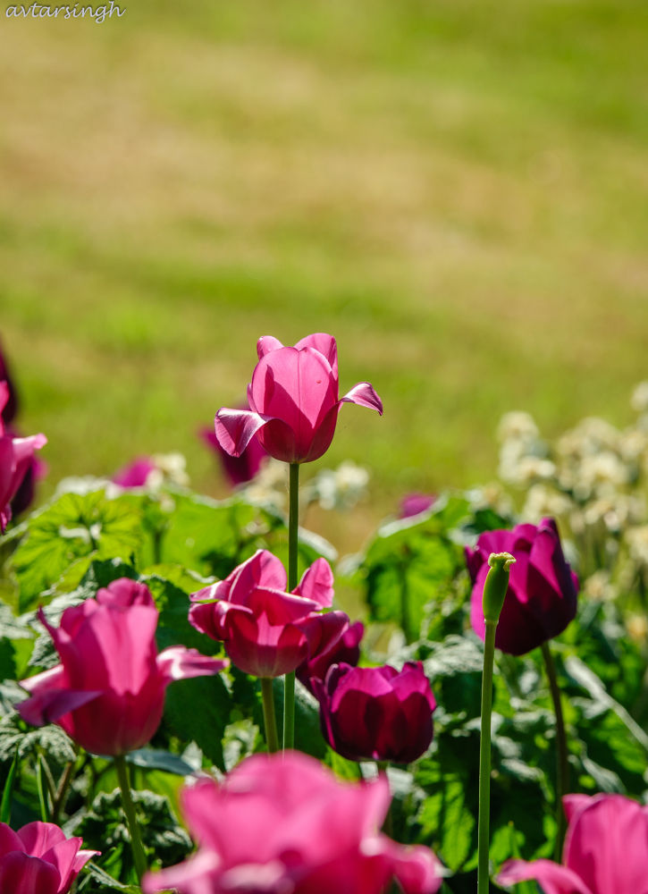 Standing out from the crowd by Avtar Singh