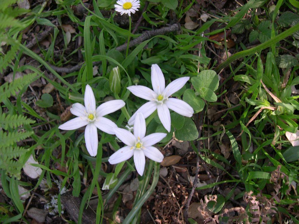 flores de nieve by dado13