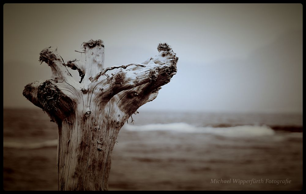 dead tree with seaview by Michael Wipperfürth